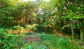 Randonnée Marche CORCY - en forêt de Retz_58_le bois de Hautwison - Photo 62