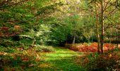 Randonnée Marche CORCY - en forêt de Retz_58_le bois de Hautwison - Photo 60
