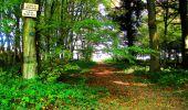 Randonnée Marche CORCY - en forêt de Retz_58_le bois de Hautwison - Photo 51