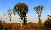 Randonnée Marche CORCY - en forêt de Retz_58_le bois de Hautwison - Photo 22