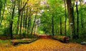 Randonnée Marche CORCY - en forêt de Retz_58_le bois de Hautwison - Photo 42