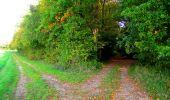 Randonnée Marche CORCY - en forêt de Retz_58_le bois de Hautwison - Photo 69
