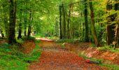 Randonnée Marche CORCY - en forêt de Retz_58_le bois de Hautwison - Photo 32