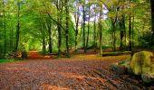 Randonnée Marche CORCY - en forêt de Retz_58_le bois de Hautwison - Photo 46