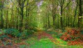 Randonnée Marche CORCY - en forêt de Retz_58_le bois de Hautwison - Photo 49