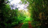 Randonnée Marche CORCY - en forêt de Retz_58_le bois de Hautwison - Photo 78