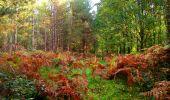 Randonnée Marche CORCY - en forêt de Retz_58_le bois de Hautwison - Photo 67