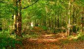Randonnée Marche CORCY - en forêt de Retz_58_le bois de Hautwison - Photo 52