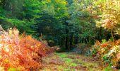Randonnée Marche CORCY - en forêt de Retz_58_le bois de Hautwison - Photo 59