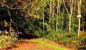 Randonnée Marche CORCY - en forêt de Retz_58_le bois de Hautwison - Photo 55