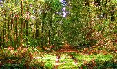 Randonnée Marche CORCY - en forêt de Retz_58_le bois de Hautwison - Photo 41