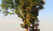 Randonnée Marche CORCY - en forêt de Retz_58_le bois de Hautwison - Photo 23