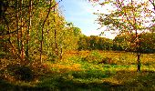 Randonnée Marche CORCY - en forêt de Retz_58_le bois de Hautwison - Photo 65