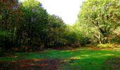 Randonnée Marche CORCY - en forêt de Retz_58_le bois de Hautwison - Photo 50