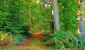 Randonnée Marche CORCY - en forêt de Retz_58_le bois de Hautwison - Photo 35