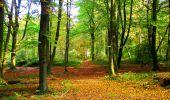 Randonnée Marche CORCY - en forêt de Retz_58_le bois de Hautwison - Photo 43