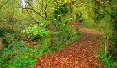 Randonnée Marche CORCY - en forêt de Retz_58_le bois de Hautwison - Photo 80