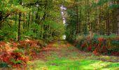 Randonnée Marche CORCY - en forêt de Retz_58_le bois de Hautwison - Photo 37