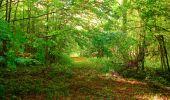 Randonnée Marche CORCY - en forêt de Retz_58_le bois de Hautwison - Photo 53