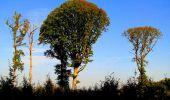 Randonnée Marche CORCY - en forêt de Retz_58_le bois de Hautwison - Photo 21