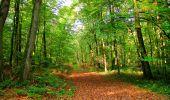 Randonnée Marche CORCY - en forêt de Retz_58_le bois de Hautwison - Photo 44