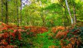 Randonnée Marche CORCY - en forêt de Retz_58_le bois de Hautwison - Photo 66