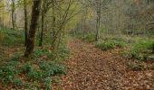 Trail Walk La Roche-en-Ardenne - Celtes et Ourthe - Photo 4