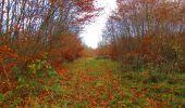 Trail Walk VIEUX-MOULIN - en forêt de Compiègne_8_Mont Collet_Mont St-Mard_RP de l'Armistice - Photo 33