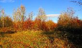Trail Walk VIEUX-MOULIN - en forêt de Compiègne_8_Mont Collet_Mont St-Mard_RP de l'Armistice - Photo 46