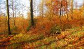 Trail Walk VIEUX-MOULIN - en forêt de Compiègne_8_Mont Collet_Mont St-Mard_RP de l'Armistice - Photo 48