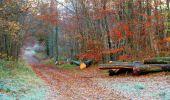 Trail Walk VIEUX-MOULIN - en forêt de Compiègne_8_Mont Collet_Mont St-Mard_RP de l'Armistice - Photo 15