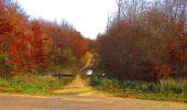 Trail Walk VIEUX-MOULIN - en forêt de Compiègne_8_Mont Collet_Mont St-Mard_RP de l'Armistice - Photo 35