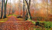 Trail Walk VIEUX-MOULIN - en forêt de Compiègne_8_Mont Collet_Mont St-Mard_RP de l'Armistice - Photo 57
