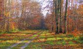 Trail Walk VIEUX-MOULIN - en forêt de Compiègne_8_Mont Collet_Mont St-Mard_RP de l'Armistice - Photo 75