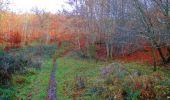 Trail Walk VIEUX-MOULIN - en forêt de Compiègne_8_Mont Collet_Mont St-Mard_RP de l'Armistice - Photo 53