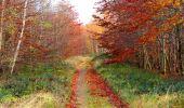 Trail Walk VIEUX-MOULIN - en forêt de Compiègne_8_Mont Collet_Mont St-Mard_RP de l'Armistice - Photo 37