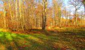 Trail Walk VIEUX-MOULIN - en forêt de Compiègne_8_Mont Collet_Mont St-Mard_RP de l'Armistice - Photo 70