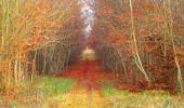 Trail Walk VIEUX-MOULIN - en forêt de Compiègne_8_Mont Collet_Mont St-Mard_RP de l'Armistice - Photo 38