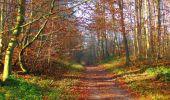 Trail Walk VIEUX-MOULIN - en forêt de Compiègne_8_Mont Collet_Mont St-Mard_RP de l'Armistice - Photo 76