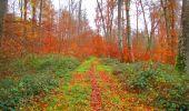 Trail Walk VIEUX-MOULIN - en forêt de Compiègne_8_Mont Collet_Mont St-Mard_RP de l'Armistice - Photo 23