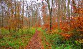 Trail Walk VIEUX-MOULIN - en forêt de Compiègne_8_Mont Collet_Mont St-Mard_RP de l'Armistice - Photo 21