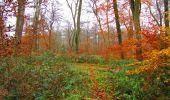 Trail Walk VIEUX-MOULIN - en forêt de Compiègne_8_Mont Collet_Mont St-Mard_RP de l'Armistice - Photo 24