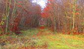 Trail Walk VIEUX-MOULIN - en forêt de Compiègne_8_Mont Collet_Mont St-Mard_RP de l'Armistice - Photo 39