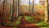 Trail Walk VIEUX-MOULIN - en forêt de Compiègne_8_Mont Collet_Mont St-Mard_RP de l'Armistice - Photo 66