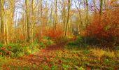 Trail Walk VIEUX-MOULIN - en forêt de Compiègne_8_Mont Collet_Mont St-Mard_RP de l'Armistice - Photo 63