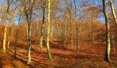 Trail Walk VIEUX-MOULIN - en forêt de Compiègne_8_Mont Collet_Mont St-Mard_RP de l'Armistice - Photo 50