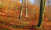 Trail Walk VIEUX-MOULIN - en forêt de Compiègne_8_Mont Collet_Mont St-Mard_RP de l'Armistice - Photo 49