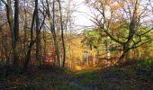 Trail Walk VIEUX-MOULIN - en forêt de Compiègne_8_Mont Collet_Mont St-Mard_RP de l'Armistice - Photo 74