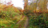 Trail Walk VIEUX-MOULIN - en forêt de Compiègne_8_Mont Collet_Mont St-Mard_RP de l'Armistice - Photo 44