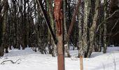 Randonnée Raquettes à neige LE VALTIN - Les 3 fours - Photo 4